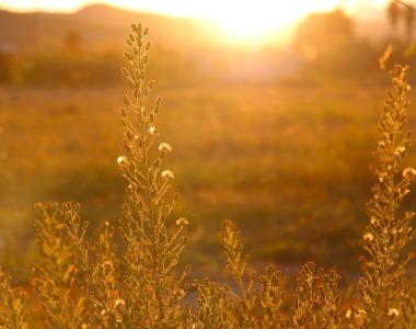 Let the sun shine – understanding vitamin D