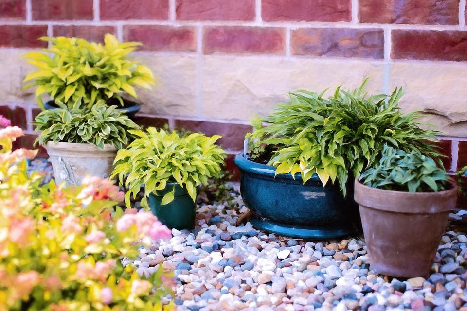 plants-in-pots-818718_960_720