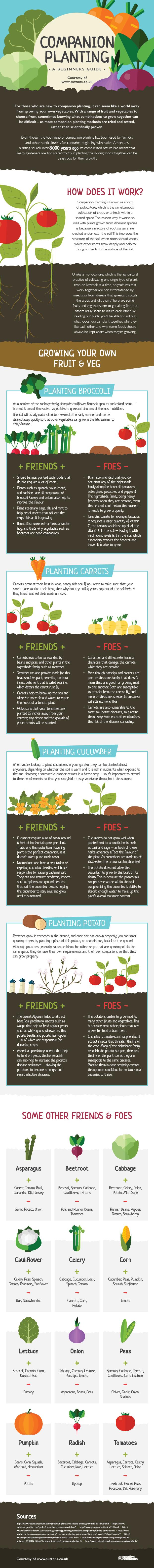 Companion Planting Infographic v4-2
