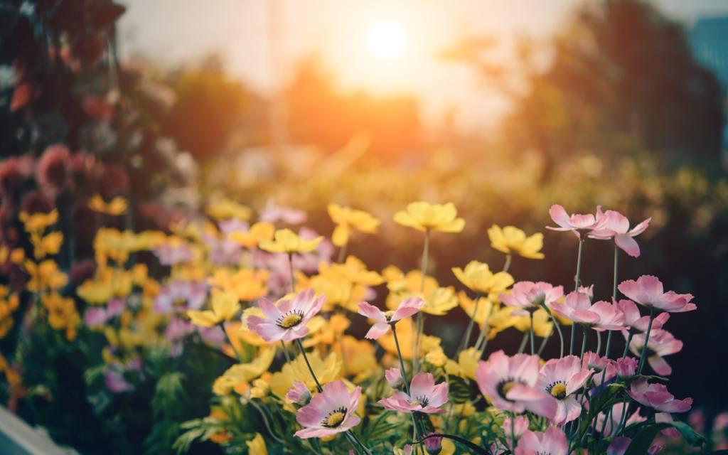 bloom-blossom-flora-158636